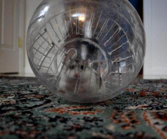 Hamster topu nedir
