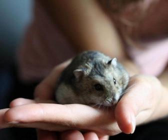Hamster Sahiplerinin Yaptığı 10 Hata