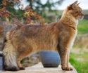 Kedi Türleri