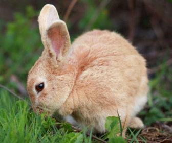 Tavşan Bakımı