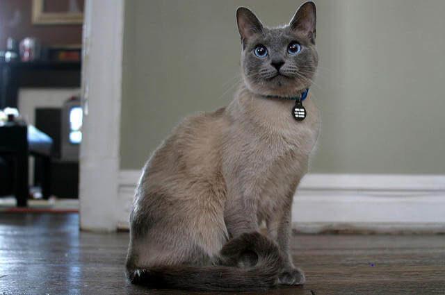 Evde Kedi Bakımı
