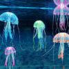 Işıkta Parlayan Denizanası Süsü