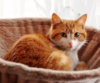 Yetişkin Kedi Bakımı