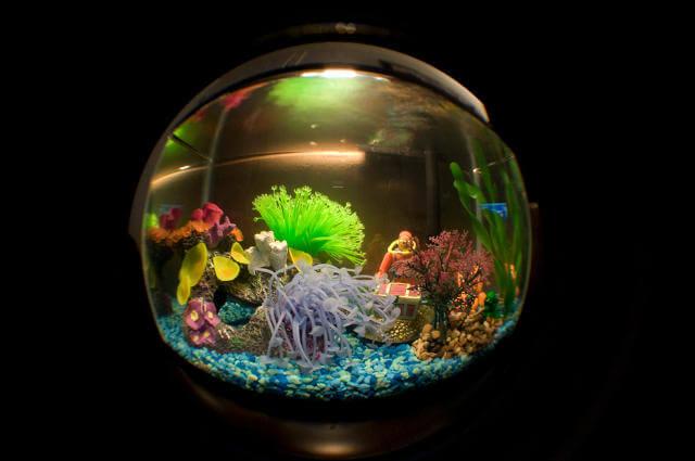 Fanus Balıkları