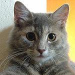 Kedi Besleyenler grup logosu